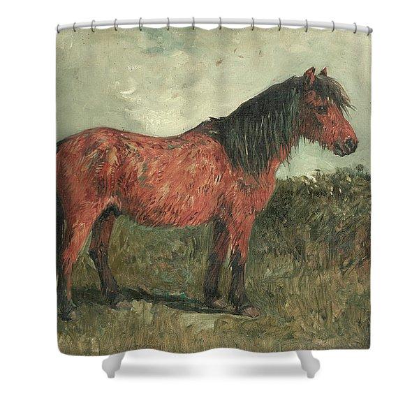 A Shetland Pony Shower Curtain