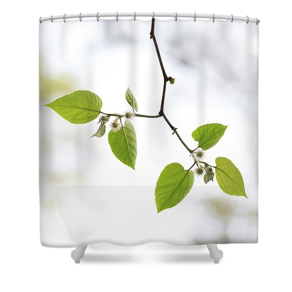 A Sky Behind Leaves Shower Curtain