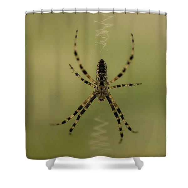 A Spider Tends Its Web At The Lincoln Shower Curtain