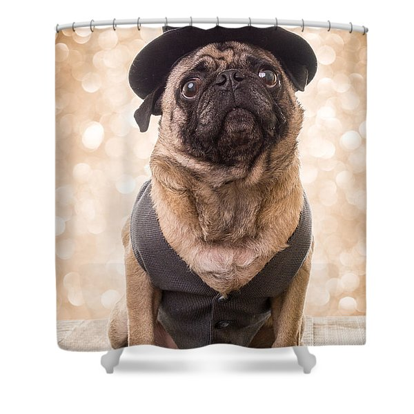 Shower Curtain featuring the photograph A Star Is Born - Dog Groom by Edward Fielding