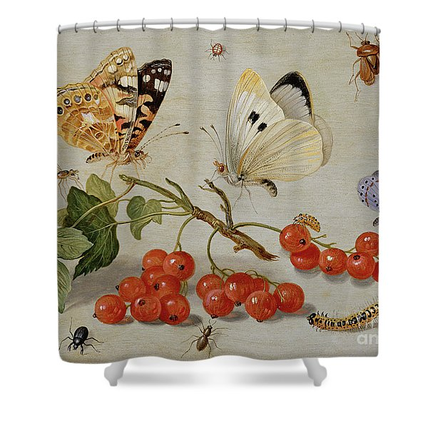 A Still Life With Sprig Of Redcurrants, Butterflies, Beetles, Caterpillar And Insects Shower Curtain