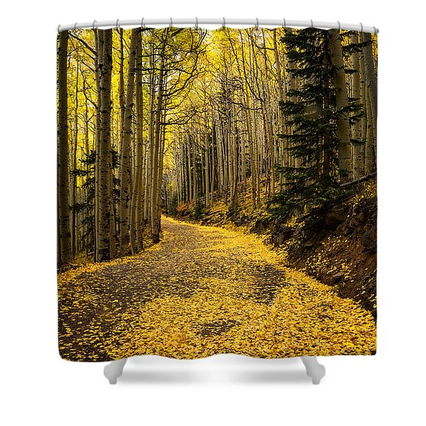 A Stroll Among The Golden Aspens  Shower Curtain