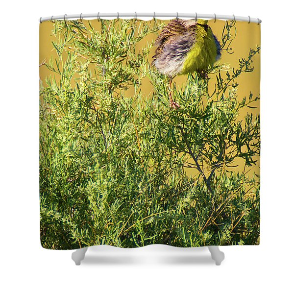 Shower Curtain featuring the photograph A Tad Ruffled by John De Bord