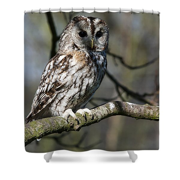 A Tawny Owl  Shower Curtain