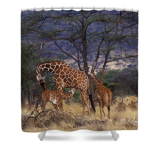 A Tender Moment Shower Curtain
