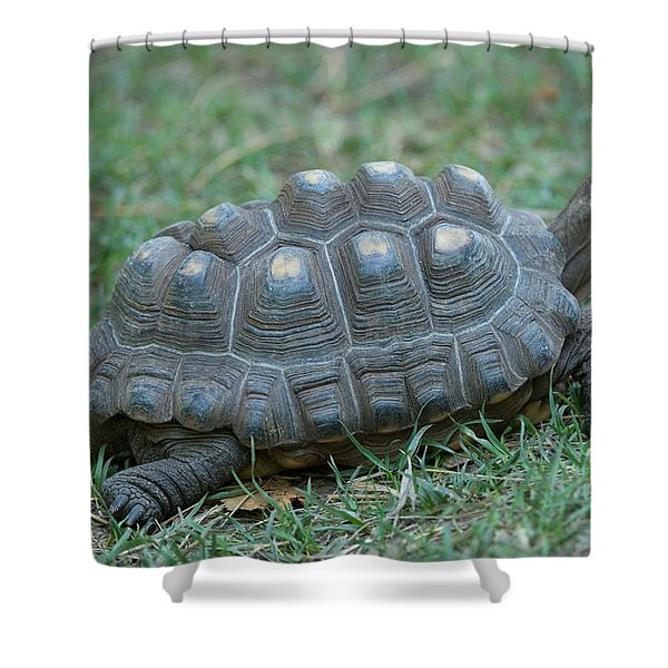A Tortoise At The Lincoln Childrens Zoo Shower Curtain