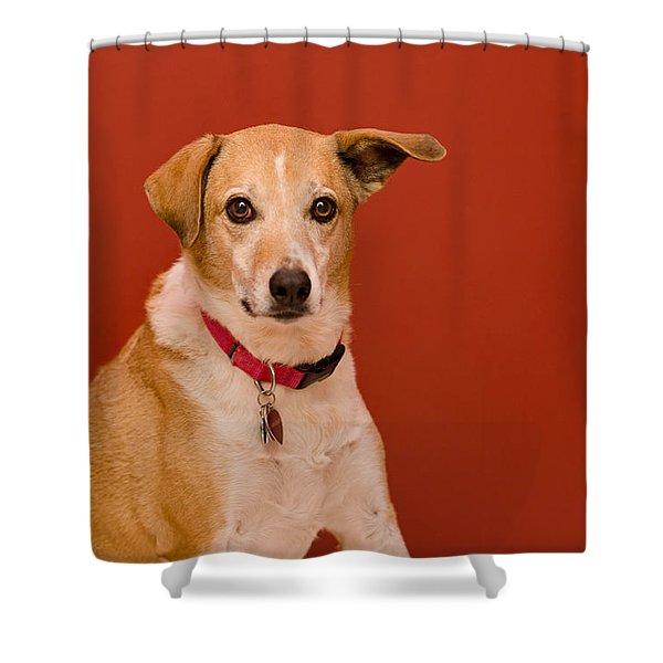 Abbie 1 Shower Curtain