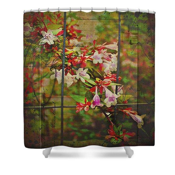 Abelia Coming Through Shower Curtain