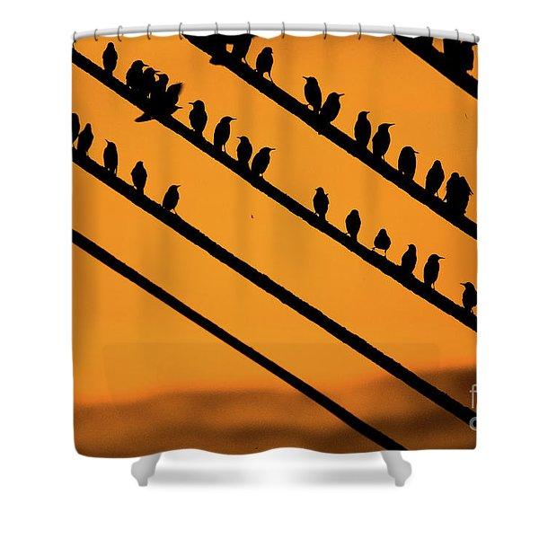 Aberystwyth Starlings At Dusk Shower Curtain