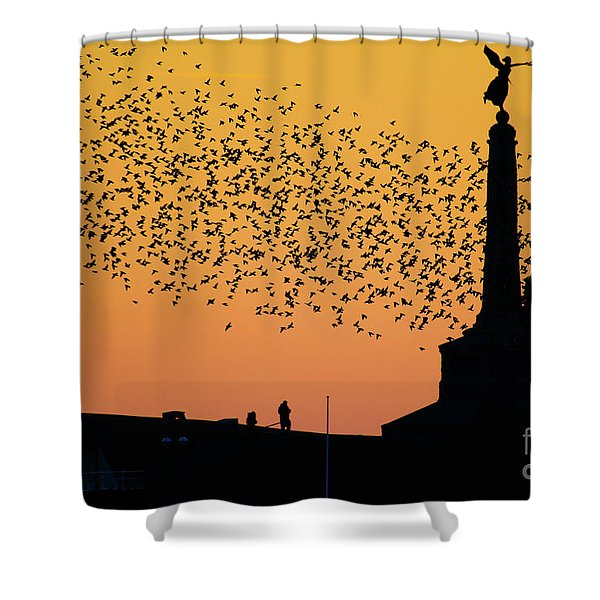 Aberystwyth Starlings Shower Curtain