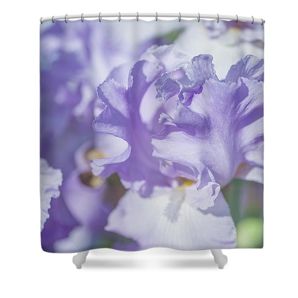 Absolute Treasure Closeup. The Beauty Of Irises Shower Curtain