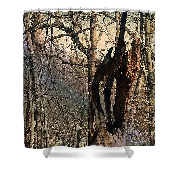 Shower Curtain featuring the photograph Abstract Dead Tree by Robert G Kernodle