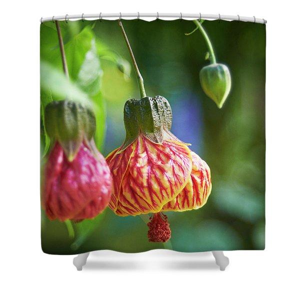 Abutilon Shower Curtain