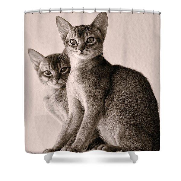 Abyssinian Kittens Shower Curtain