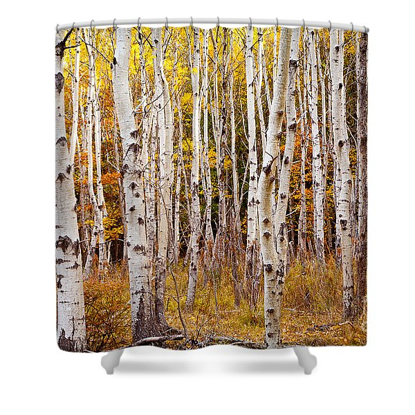 Acadia Birch Shower Curtain