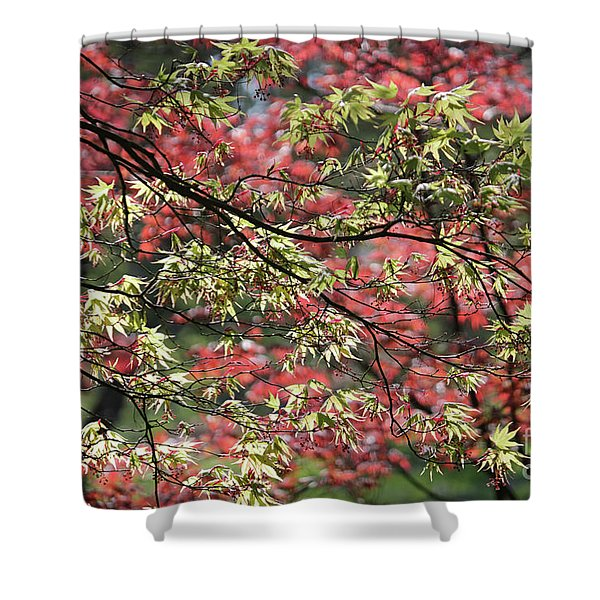 Acer Leaves In Spring Shower Curtain