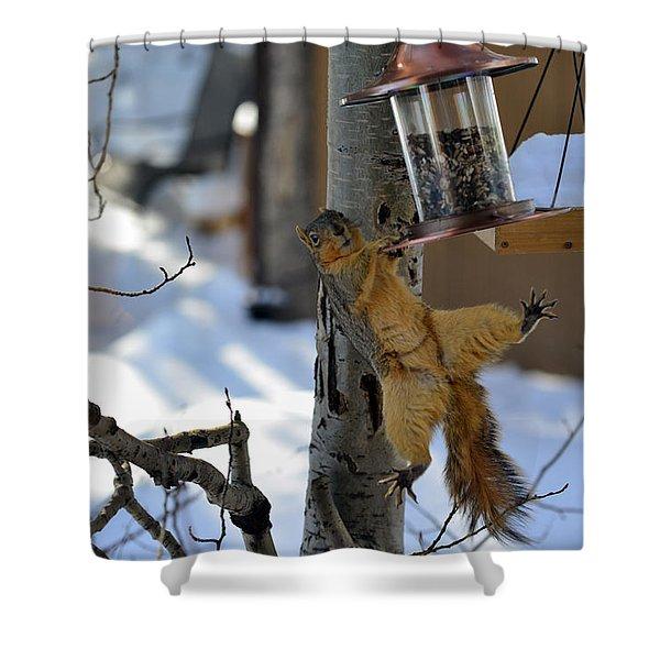 Acrobatic Squirrel Shower Curtain