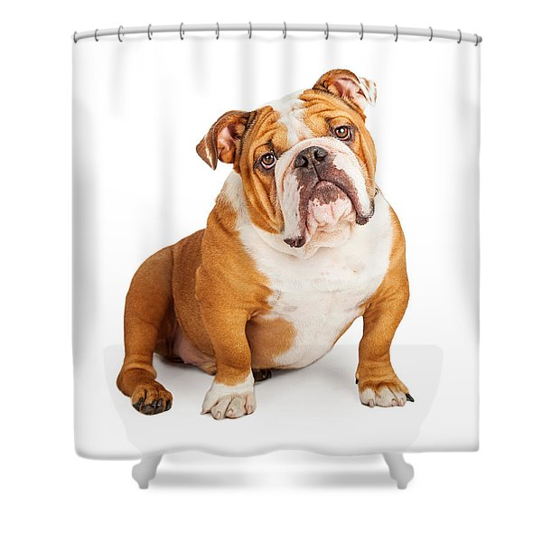 Adorable English Bulldog Looking Into The Camera Shower Curtain