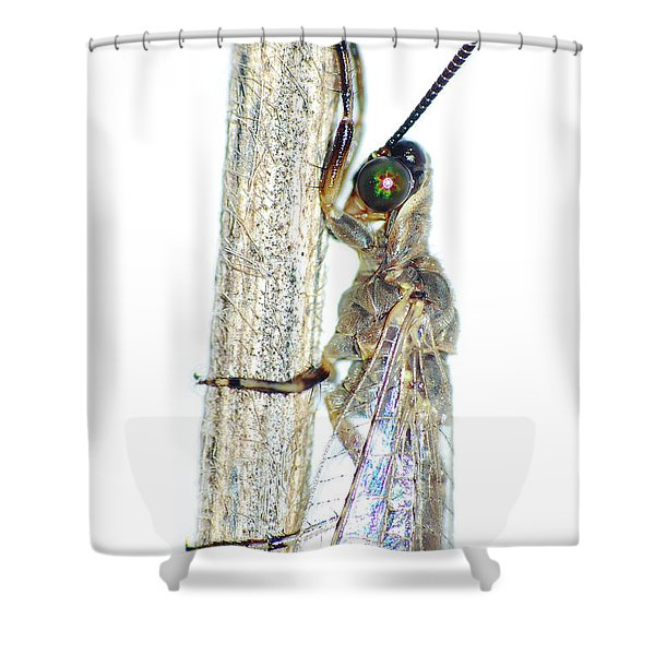 Adult Ant Lion Shower Curtain