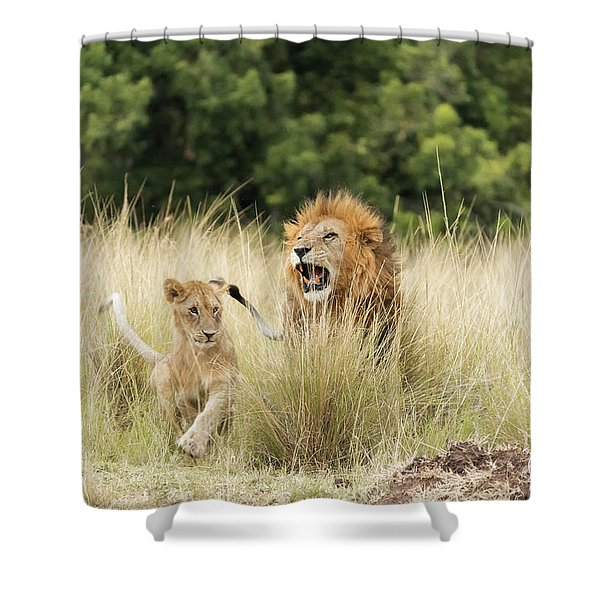 Adult Lion And Cub In The Masai Mara Shower Curtain