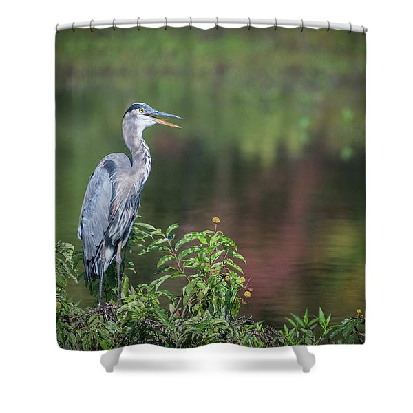 Advice From A Great Blue Heron Shower Curtain