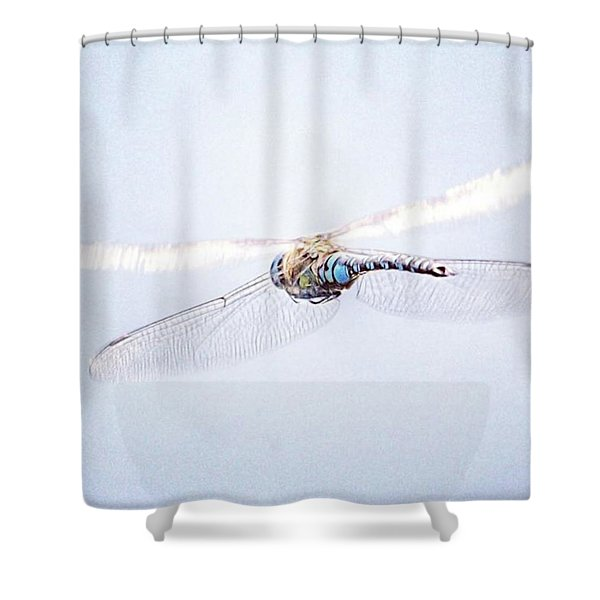 Aeshna Juncea - Common Hawker In Shower Curtain