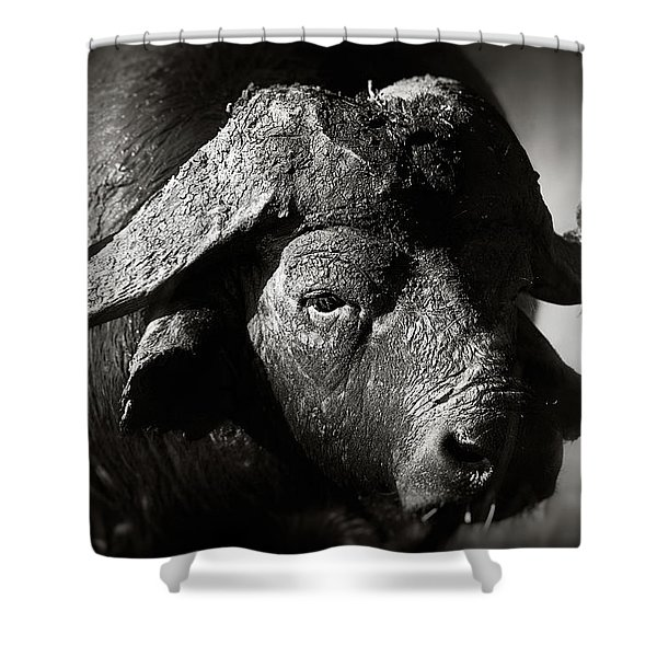African Buffalo Bull Close-up Shower Curtain