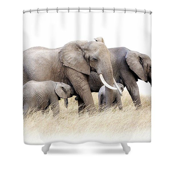 African Elephant Group Isolated Shower Curtain