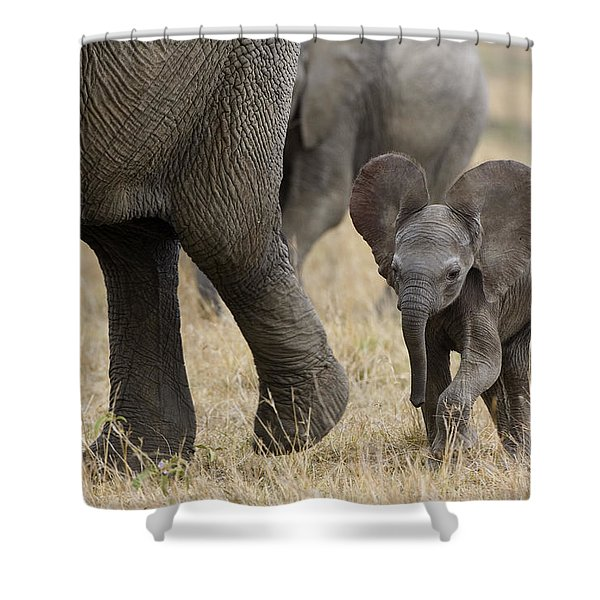 African Elephant Mother And Under 3 Shower Curtain