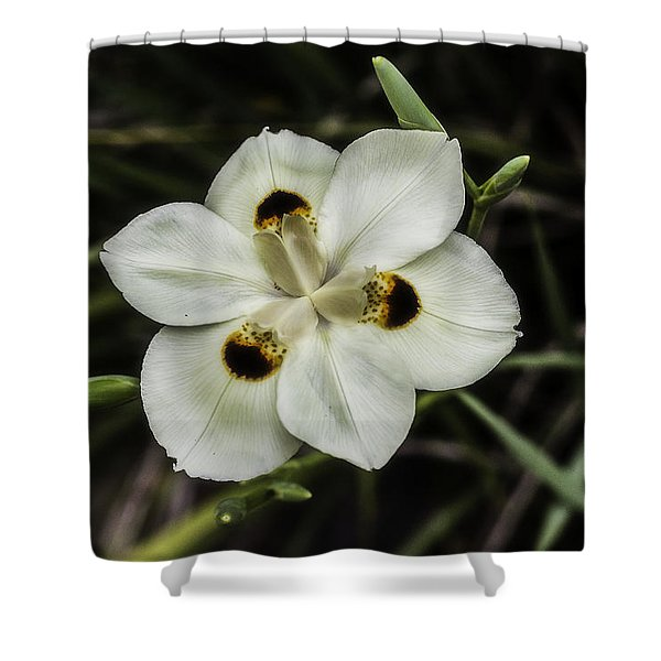 African Iris Shower Curtain