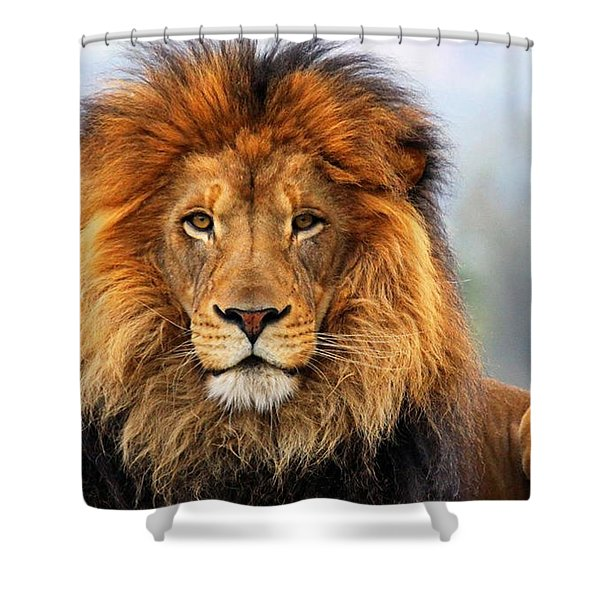 African Lion 1 Shower Curtain