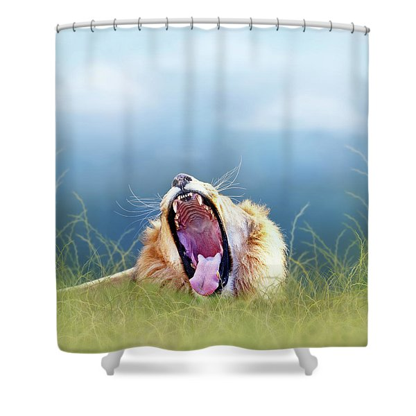 African Lion Yawning In Tall Grass Shower Curtain