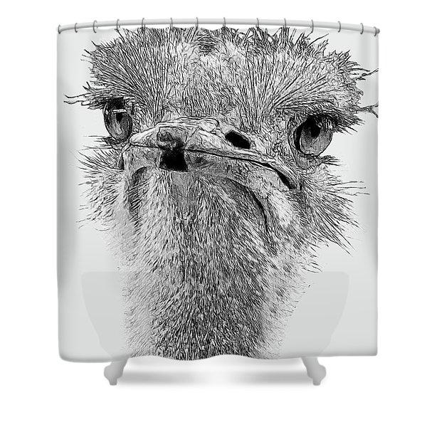 African Ostrich Sketch Shower Curtain