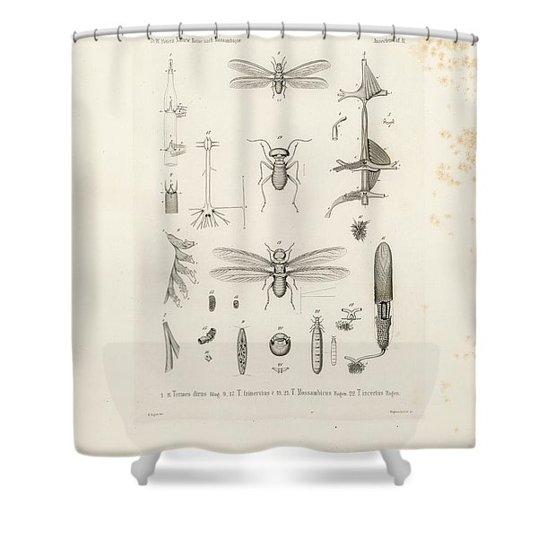 African Termites And Their Anatomy Shower Curtain