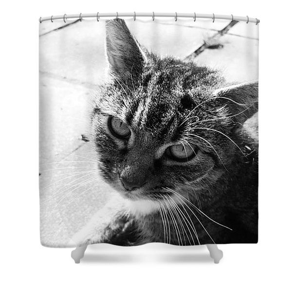 After Lunch Shower Curtain