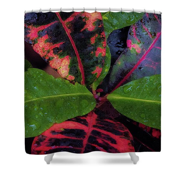 After The Rain Has Fallen Shower Curtain