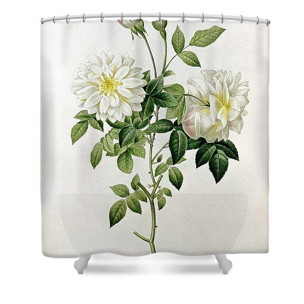 Aime Vibere Shower Curtain