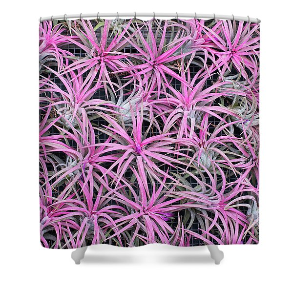 Airplants Shower Curtain