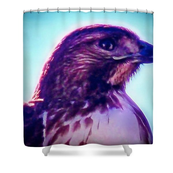 Ak-chin Red-tailed Hawk Portrait Shower Curtain