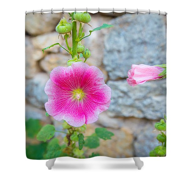 Alcea Rosea Is Known As Common Hollyhock Shower Curtain