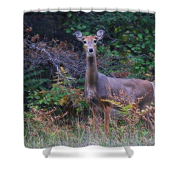Alert Deer  9529 Shower Curtain