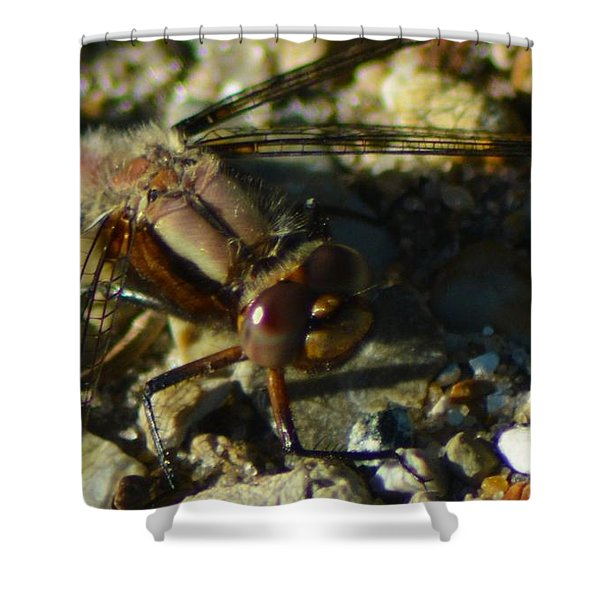 All Eyes Shower Curtain
