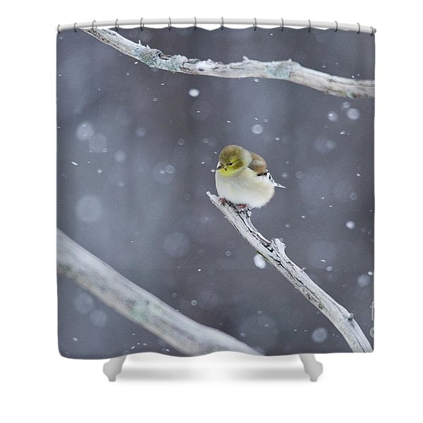 All Fluffy Shower Curtain