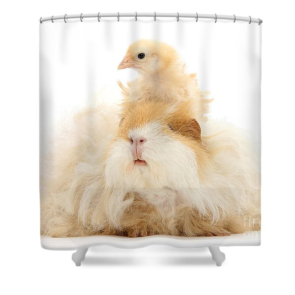 All Frizzed Up And Ready To Go Shower Curtain