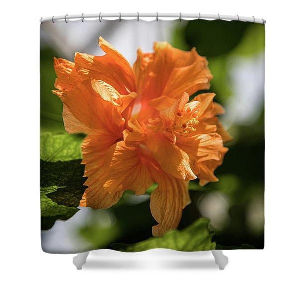 Allan Gardens Orange Shower Curtain