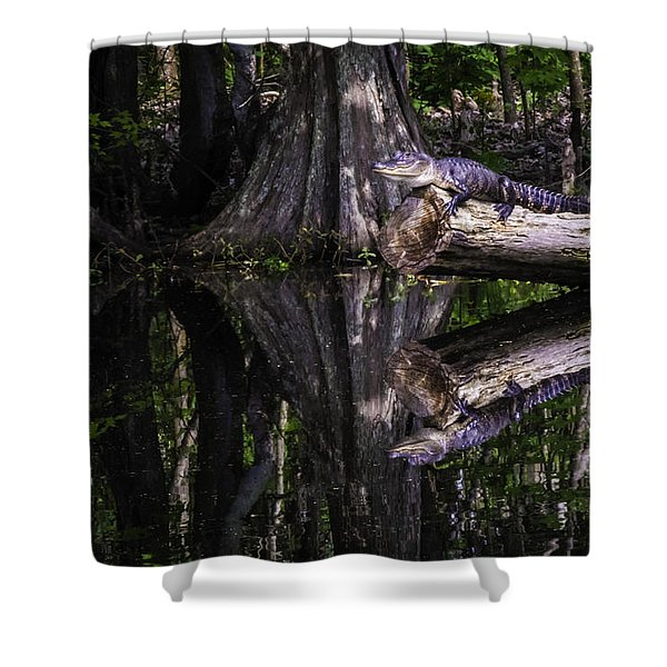 Alligators The Hunt, New Orleans, Louisiana Shower Curtain