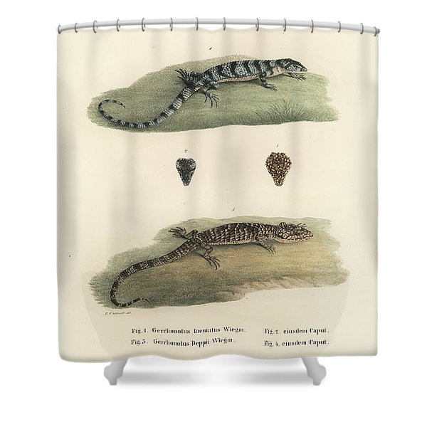 Alligator Lizards Shower Curtain