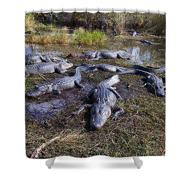 Alligators 280 Shower Curtain