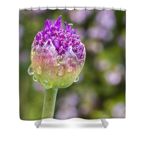 Allium Bud  Shower Curtain