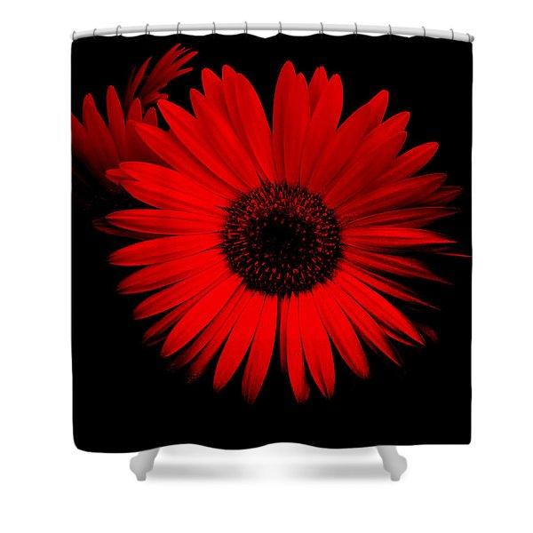 Alluring Gerbera Shower Curtain